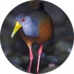 cropped-rondecoca3-150x150