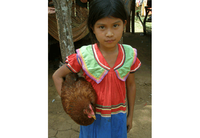 guaymi girl with chicken