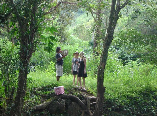 guaymi jungle