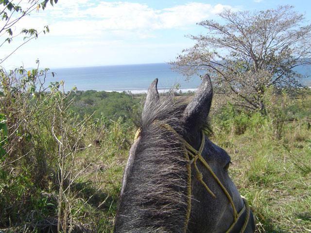 horseride seaview