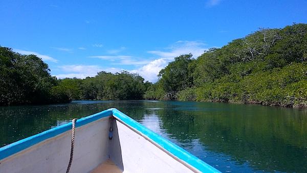 mangroves trip